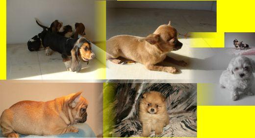 Psy a šteniatka  b4ae9606ba0