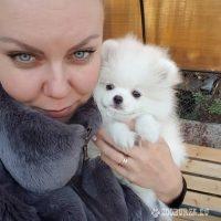 Pomeranian muž a žena na Vianoce